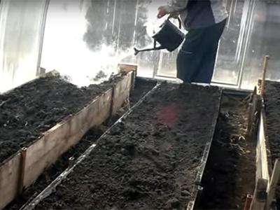 Пропариваем грядки теплицы из поликарбоната